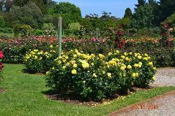 Victoria State Rose Garden