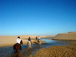 Papiesfontein Beach Horse Trails