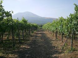 Cantina del Vesuvio