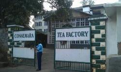 Connemara Tea Factory