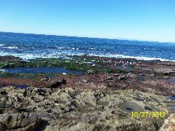 Shell Beach Tide Pools