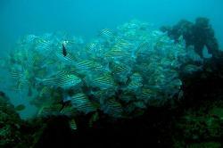 Sea Horse Divers