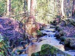 Ecclesall Woods