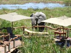 """""""Luxus-Elefant"""" kommt zum SPA"""