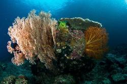 Plankton Divers El Nido