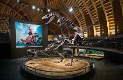 Museo Jurasico de Asturias (MUJA)