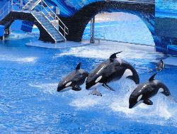 Taman Hiburan SeaWorld Orlando