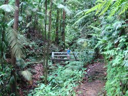 Des Cartiers Rainforest