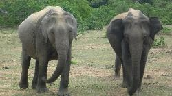 Elite Tours Sri Lanka