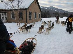 Valley Snow Dogz