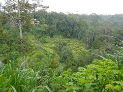 Bali Pulina - Pariwisata Pertanian
