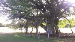 Cool trees on the golf course