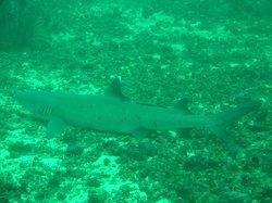 Boracay Island Divers