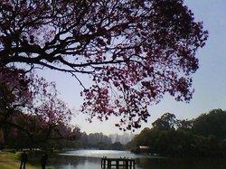 Ibirapuerapark