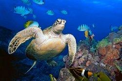 Underwater Oahu