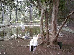 Sakkarbaug Zoological Gardens