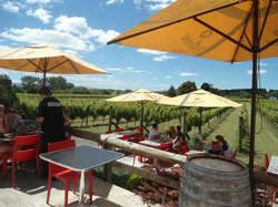 The Vineyard Cafe at Margrain Vineyard