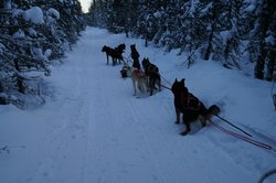 3 Dog Night Hostel - Sled Dog Tours