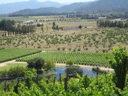 Casablanca Valley Wine Route