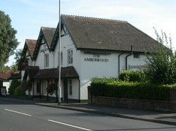 The Amberwood