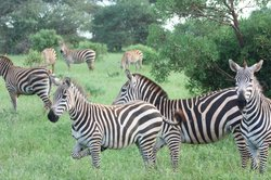 Thomas Tours & Safaris - Private Day Tours