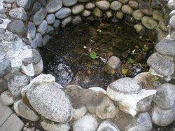 Longmire Springs