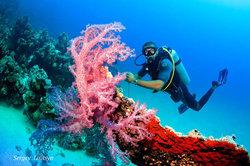 Dive Hurghada