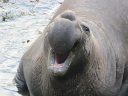 Friends of the Elephant Seal Visitor Center and Gift Shop