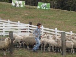 今季最後に羊ショー