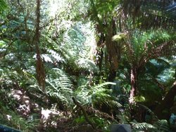 Tree Fern Gully Track