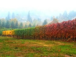 Beautiful fall color in the vineyards.
