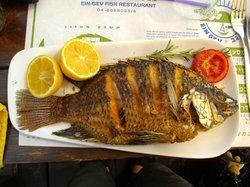 Ein Gev Fish Restaurant