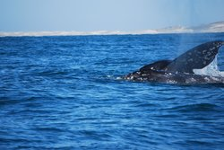 Gray Whale National Park (Parque Natural de Ballenas Gris)