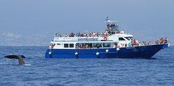 Whalewatch Genova