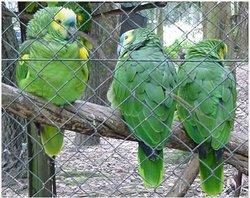 Zoo Concordia