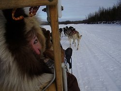 Alaskan Husky and Horse Adventures