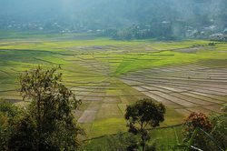 Lingko Spider Web Rice Fields - Walking Tours
