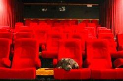 Bunkhouse Theatre