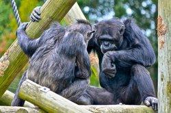 汉密尔顿动物园