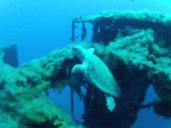 Cyprus Diving Adventures