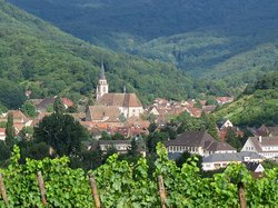 Ophorus Alsace Wine Tours