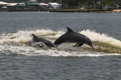 Orange Beach Private Family Dolphin Tours & Boating Safaris