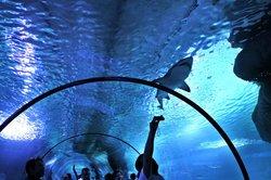 Aqua Vega Aquarium