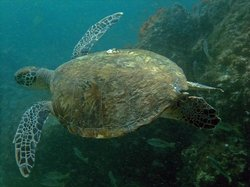 Fujairah Adventure Divers