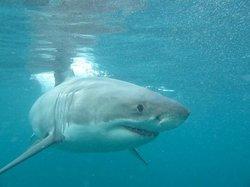 Shark Dive New Zealand
