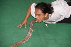 Samui Snake Farm