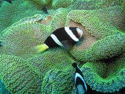 Bali Aqua Diving