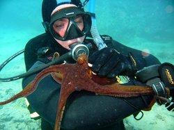 Hawaii Reef Divers