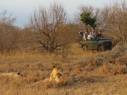 Great animal sightings in open vehicles