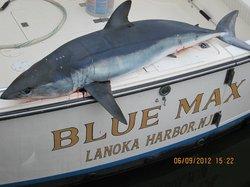 Blue Max Sportfishing